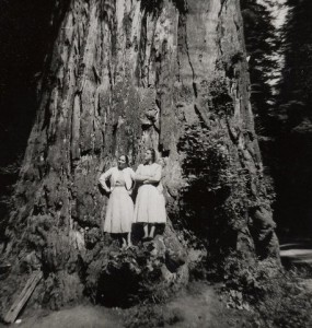 A tree Rhoda and Gail Kling could enjoy for free