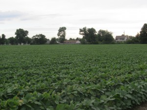THE SOY BEAN FIELD ENDS THE WALK