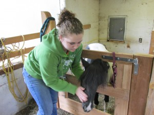 Mr. Champion's granddaughter and one of her miniature horses