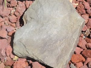 piece of slate from the run that flows through Blueberry Acres